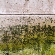 Knoxville Engineered Home Inspections Mold Testing